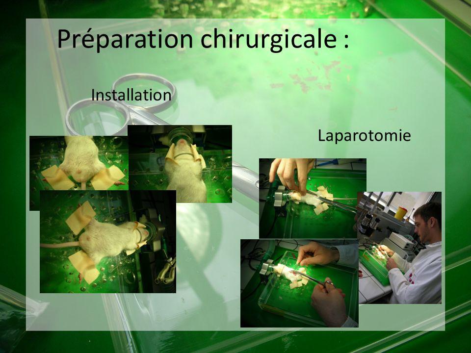 Préparation chirurgicale :