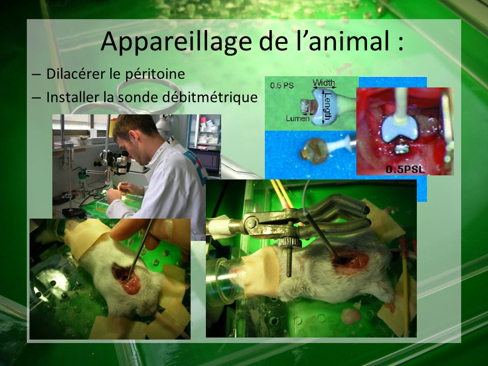 Appareillage de l'animal :