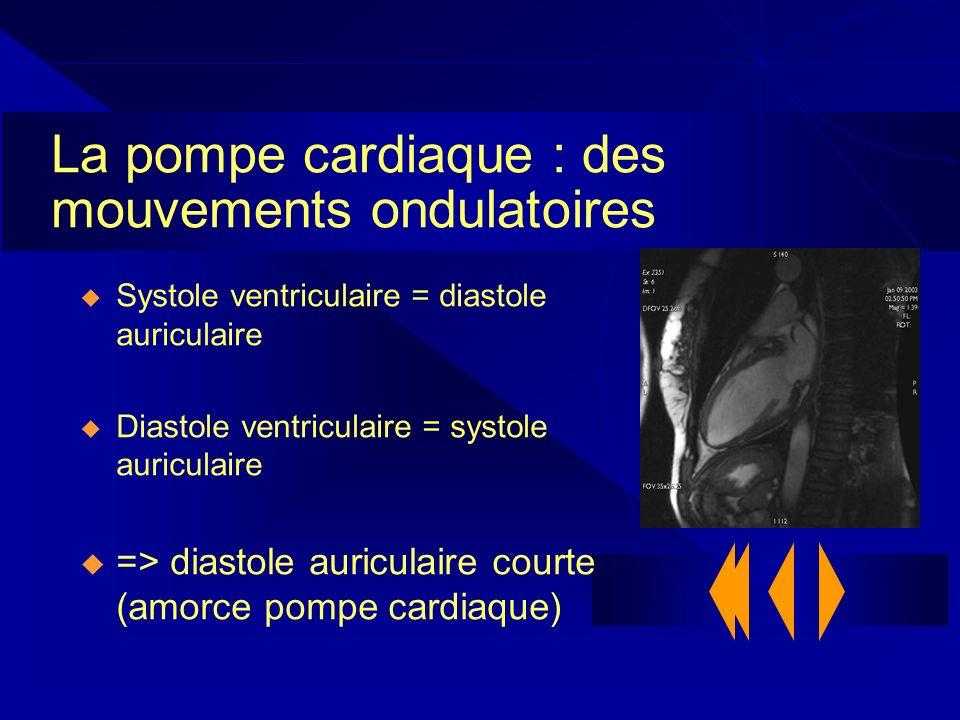 La pompe cardiaque : des mouvements ondulatoires