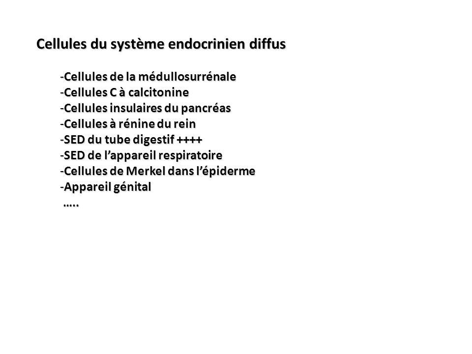 Cellules du système endocrinien diffus