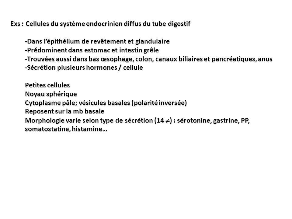 Exs : Cellules du système endocrinien diffus du tube digestif