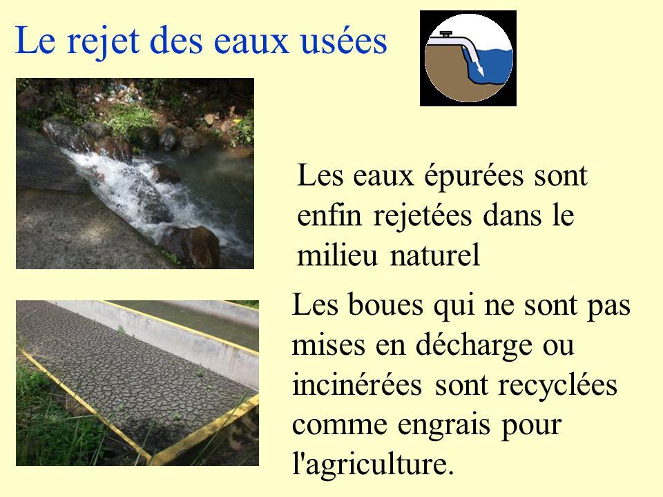 Le rejet des eaux usées Les eaux épurées sont enfin rejetées dans le milieu naturel.