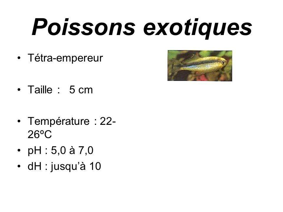 Poissons exotiques Tétra-empereur Taille : 5 cm Température : 22-26ºC