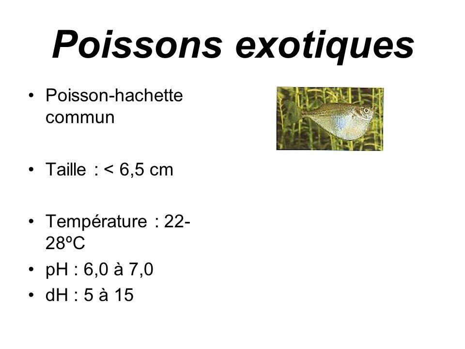 Poissons exotiques Poisson-hachette commun Taille : < 6,5 cm