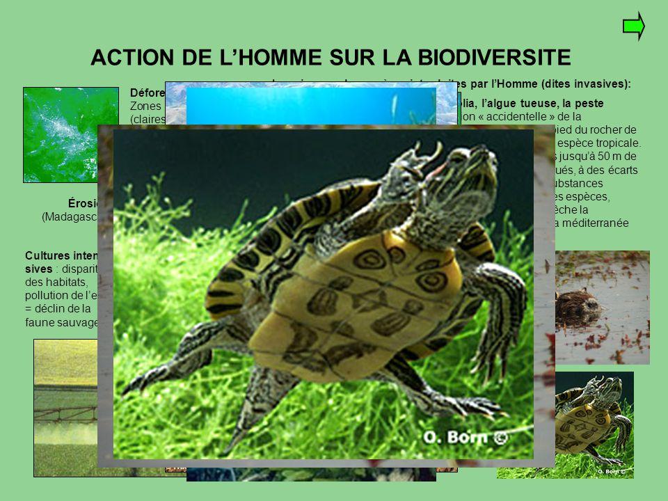 ACTION DE L'HOMME SUR LA BIODIVERSITE