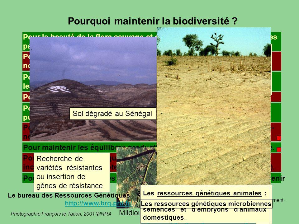 Pourquoi maintenir la biodiversité