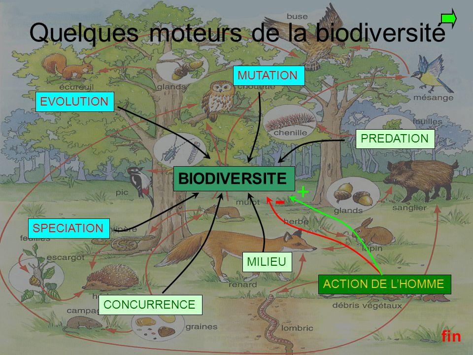 - Quelques moteurs de la biodiversité + BIODIVERSITE fin MUTATION
