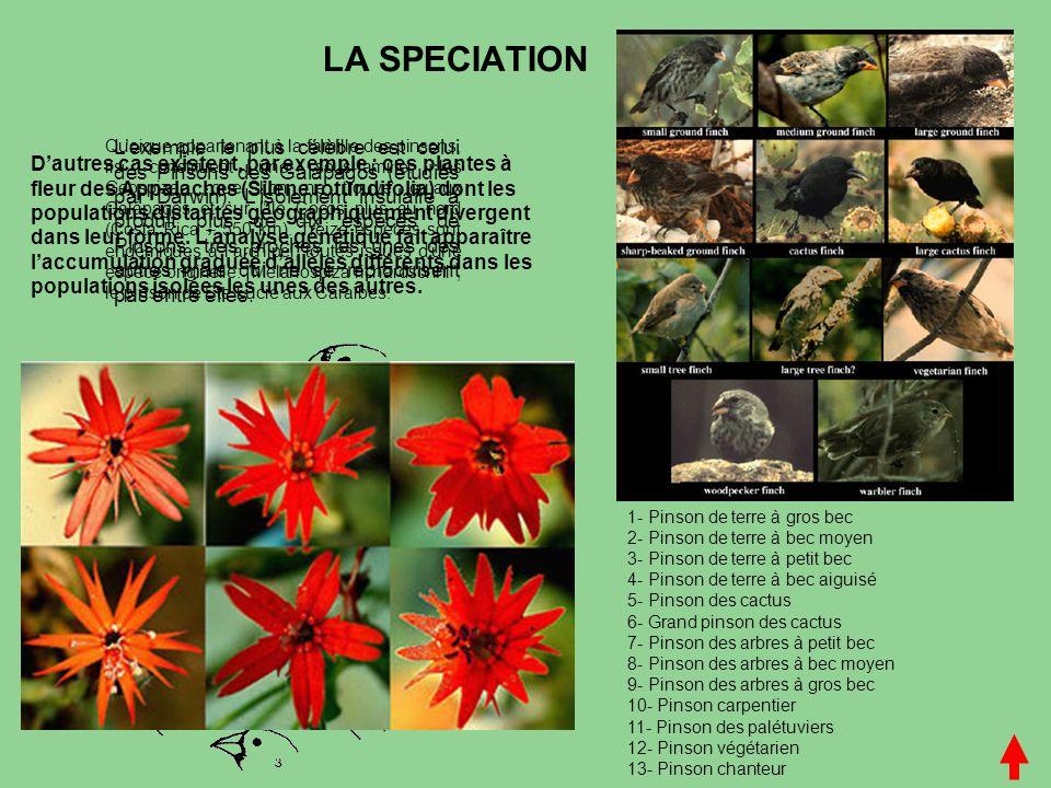 LA SPECIATION