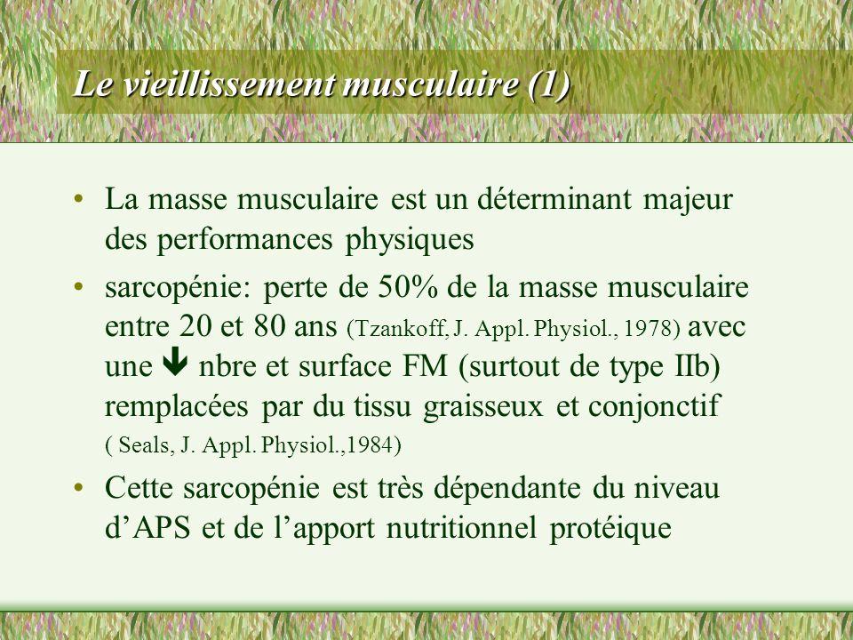 Le vieillissement musculaire (1)