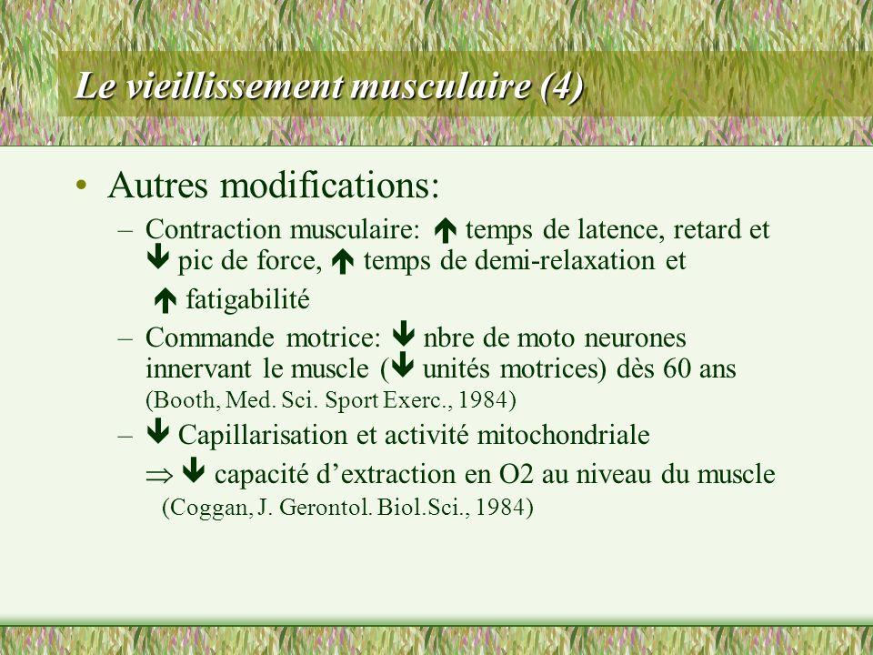 Le vieillissement musculaire (4)