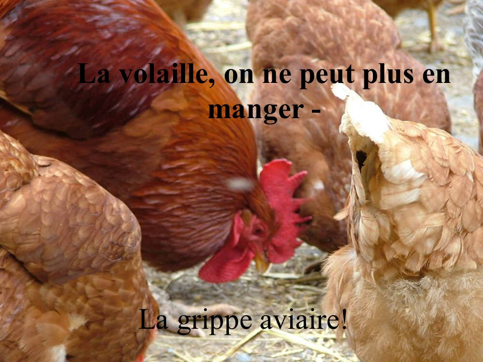 La volaille, on ne peut plus en manger -