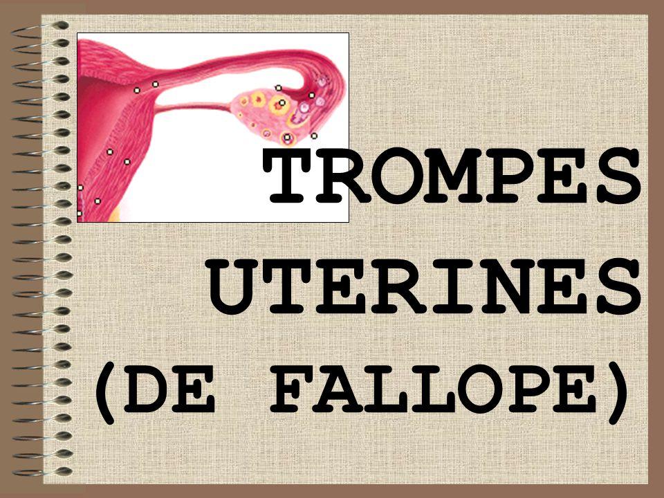 TROMPES UTERINES (DE FALLOPE)