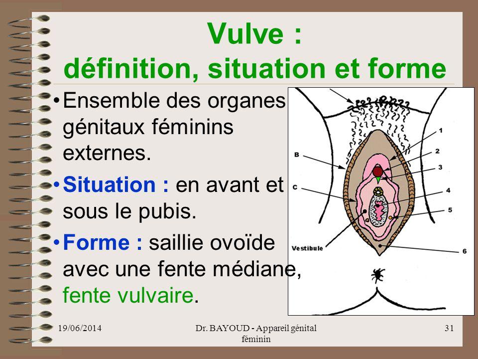 Vulve : définition, situation et forme