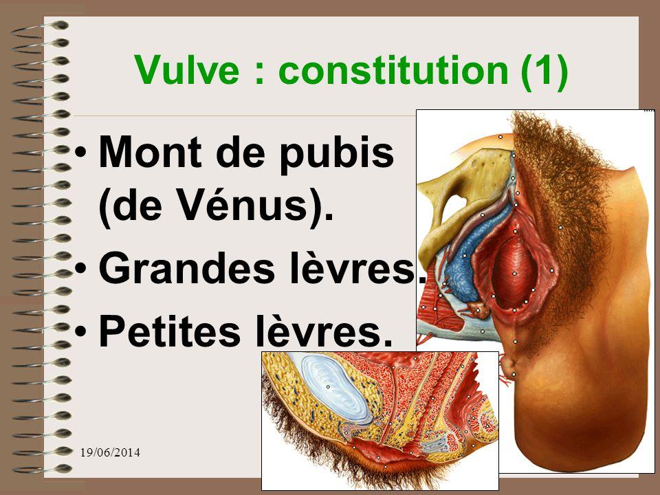 Vulve : constitution (1)