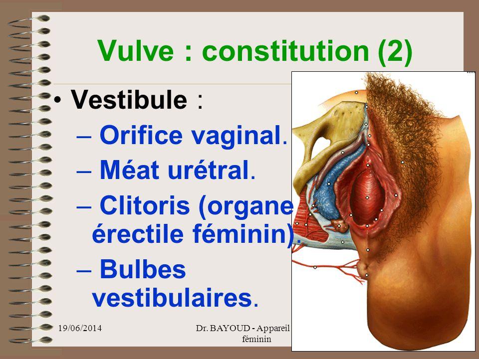 Vulve : constitution (2)