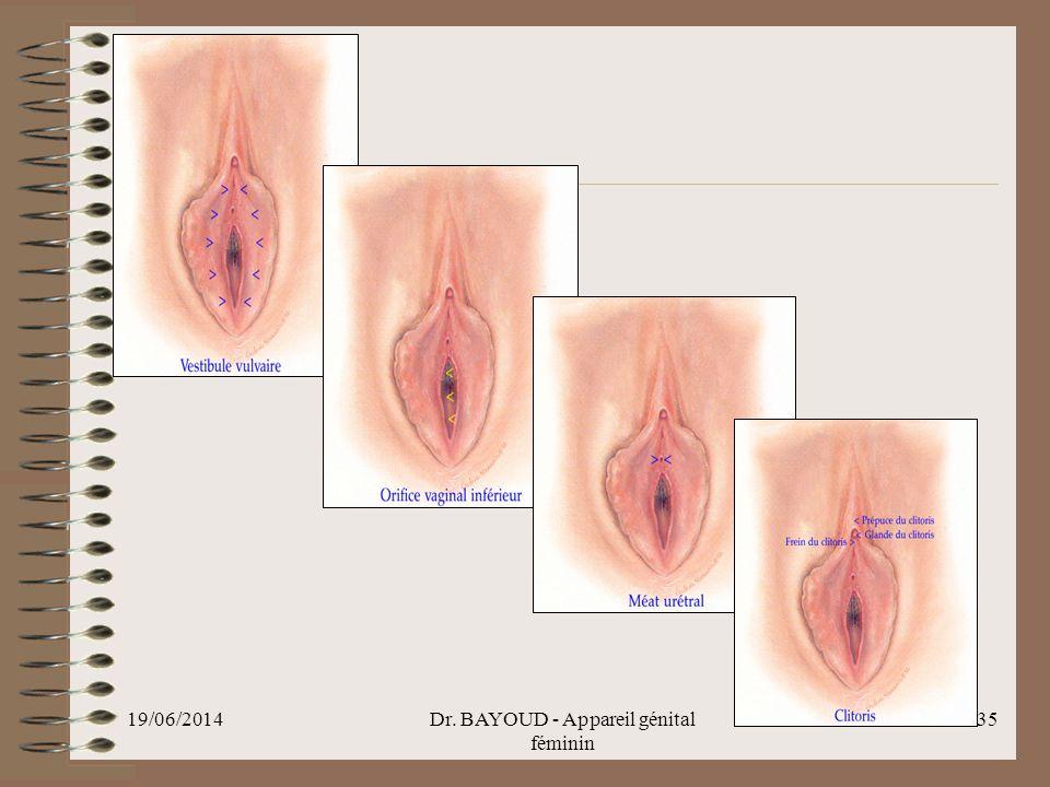 Dr. BAYOUD - Appareil génital féminin