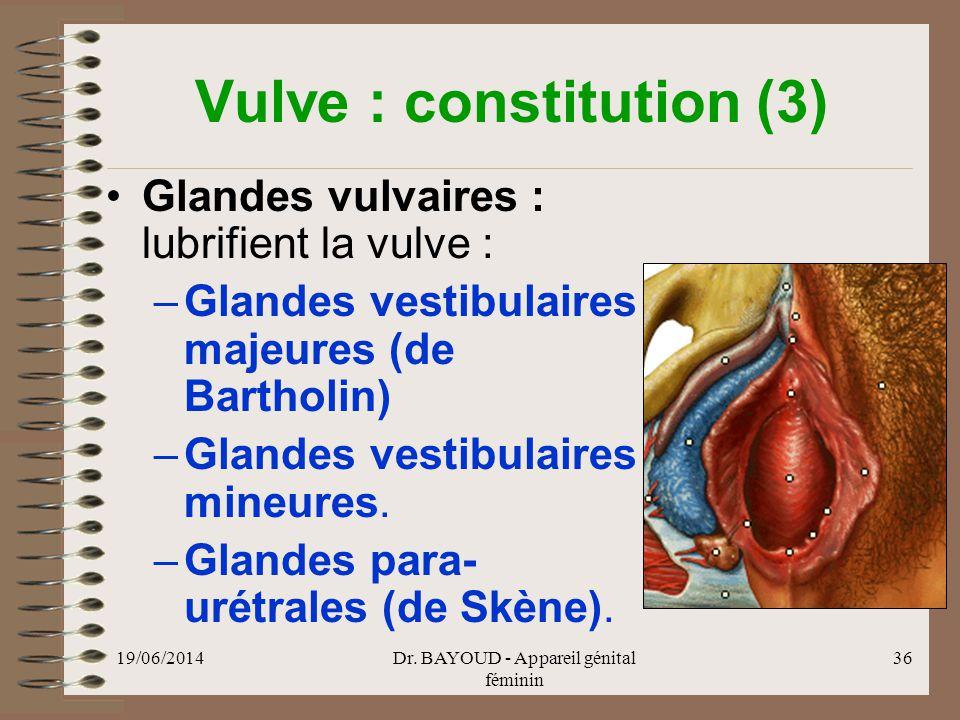 Vulve : constitution (3)