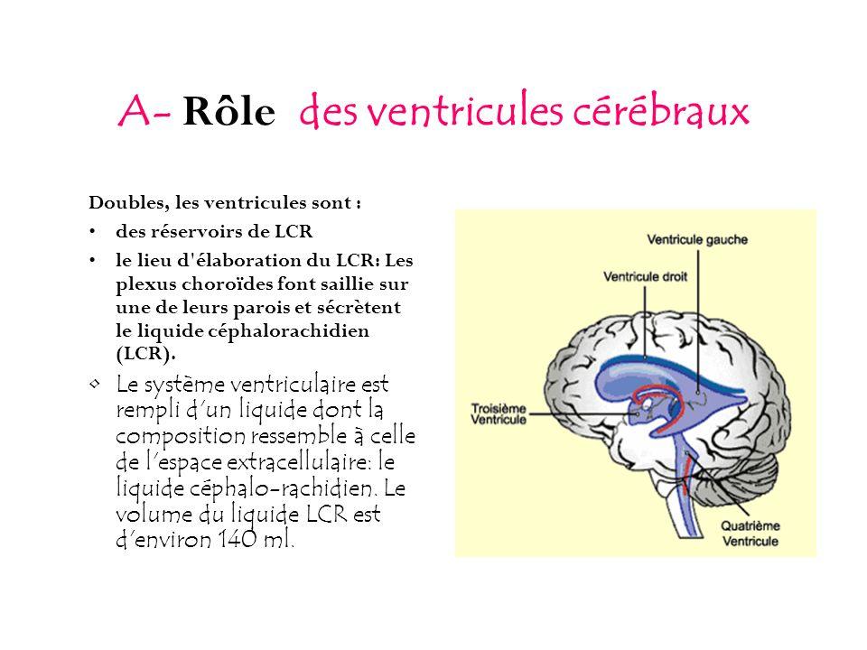 A- Rôle des ventricules cérébraux