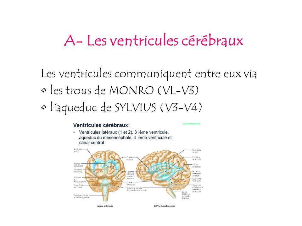 A- Les ventricules cérébraux