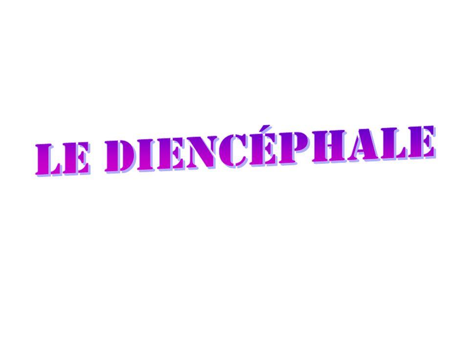 Le diencéphale