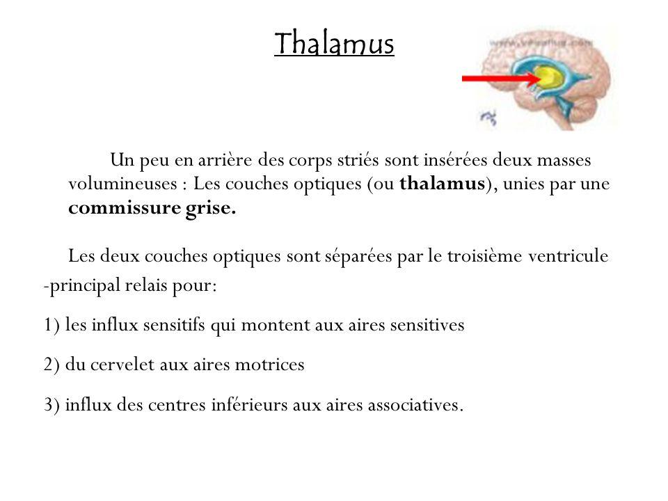 Thalamus -principal relais pour: