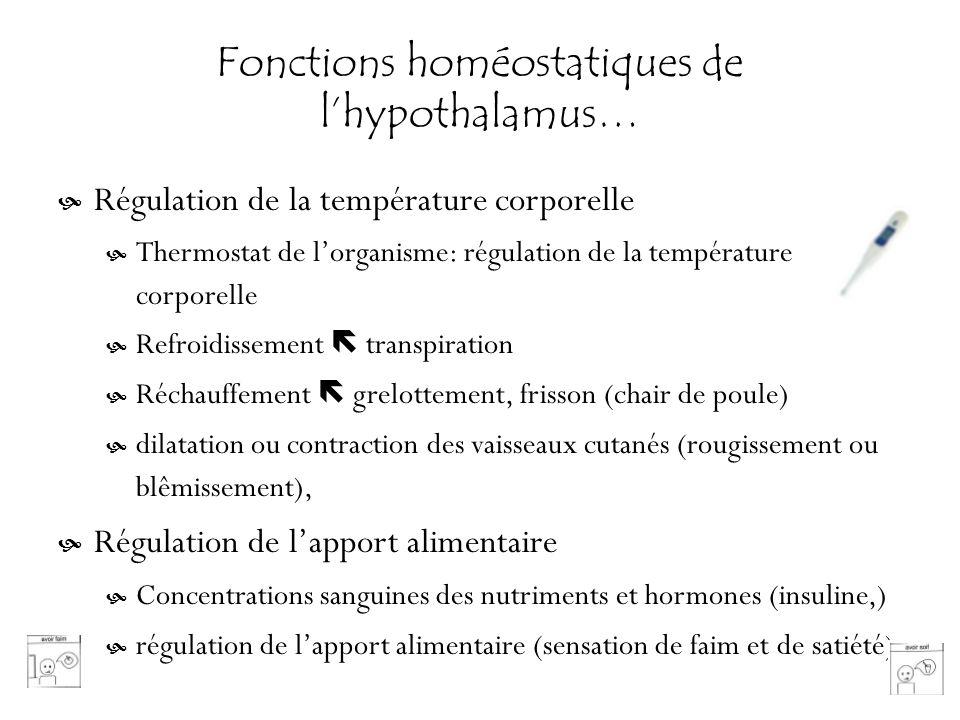 Fonctions homéostatiques de l'hypothalamus…