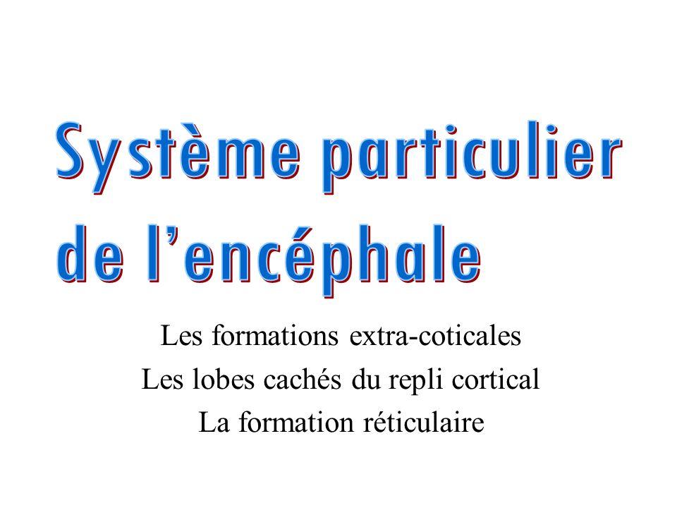 Système particulier de l'encéphale Les formations extra-coticales