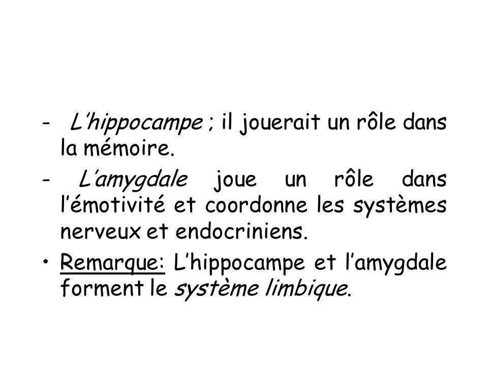 - L'hippocampe ; il jouerait un rôle dans la mémoire.
