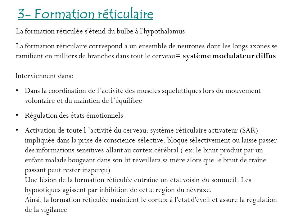 3- Formation réticulaire