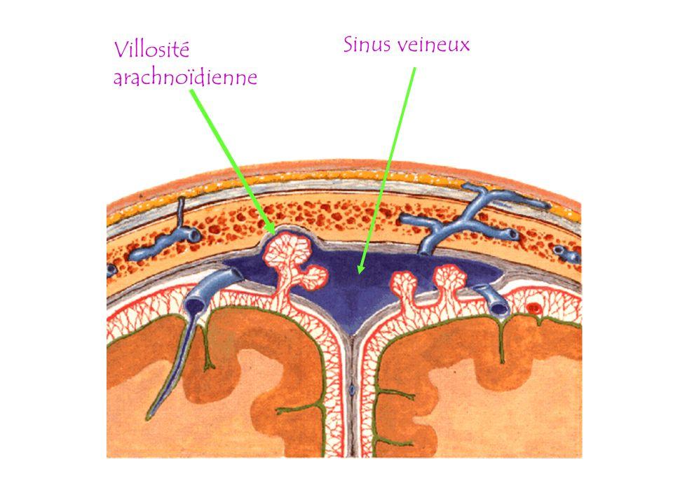 Sinus veineux Villosité arachnoïdienne