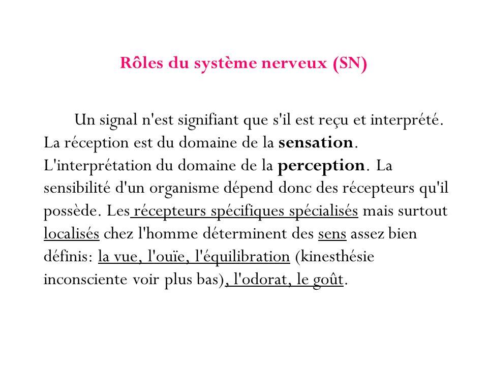 Rôles du système nerveux (SN)