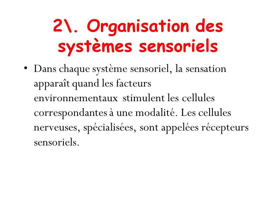 2\. Organisation des systèmes sensoriels