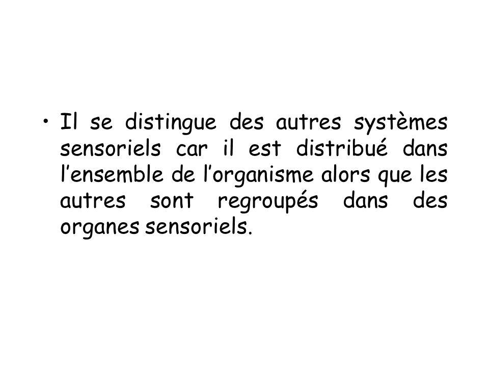 Il se distingue des autres systèmes sensoriels car il est distribué dans l'ensemble de l'organisme alors que les autres sont regroupés dans des organes sensoriels.