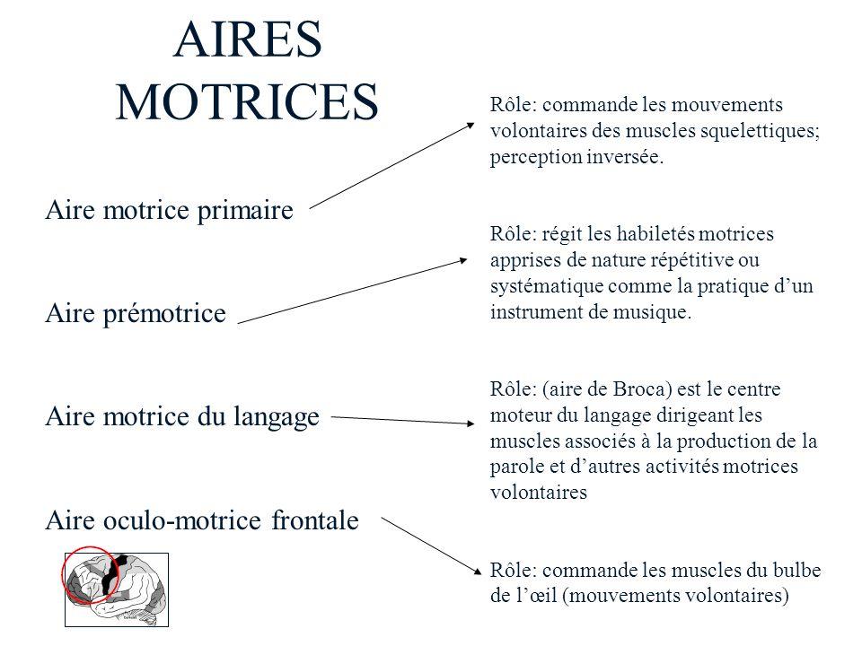 AIRES MOTRICES Aire motrice primaire Aire prémotrice