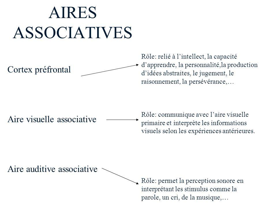 AIRES ASSOCIATIVES Cortex préfrontal Aire visuelle associative