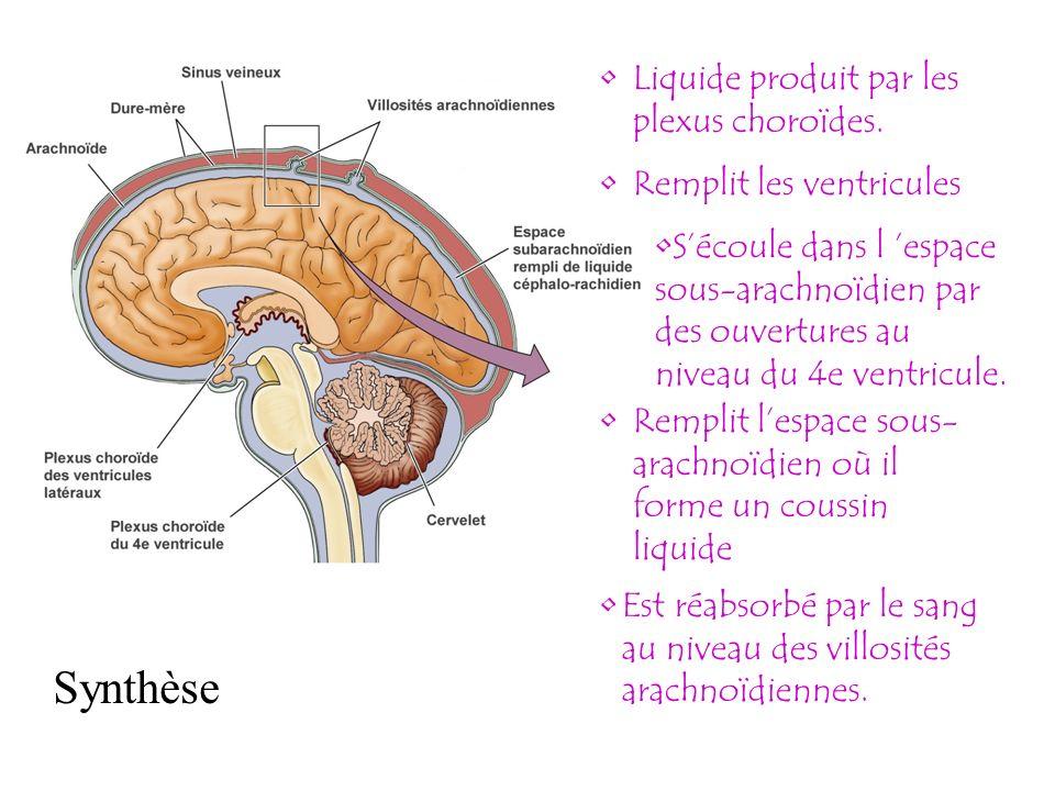 Synthèse Liquide produit par les plexus choroïdes.