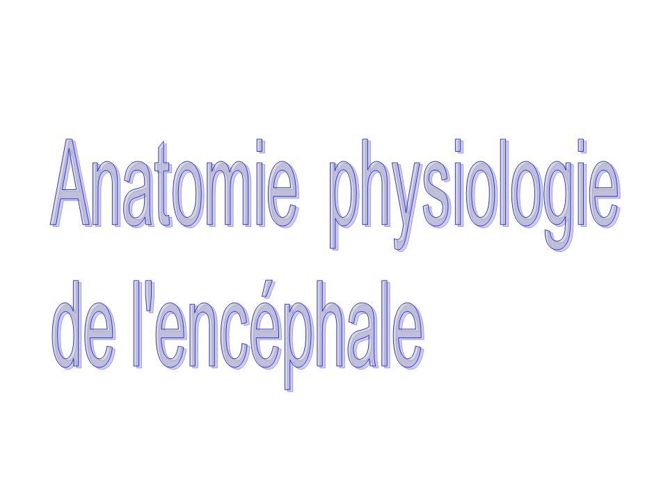 Anatomie physiologie de l encéphale