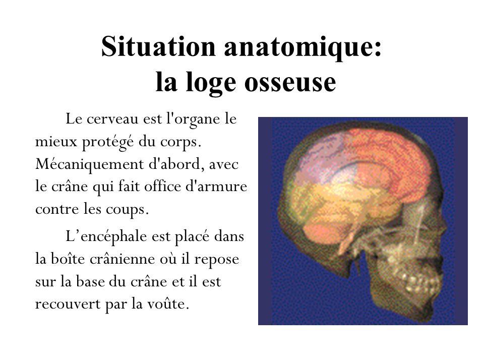 Situation anatomique: la loge osseuse