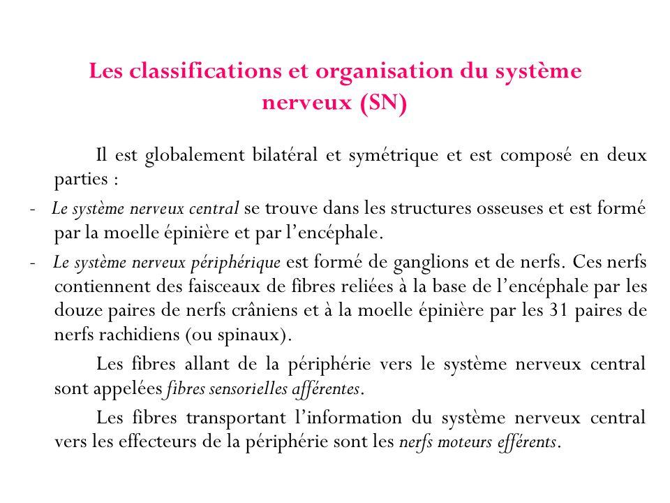 Les classifications et organisation du système nerveux (SN)