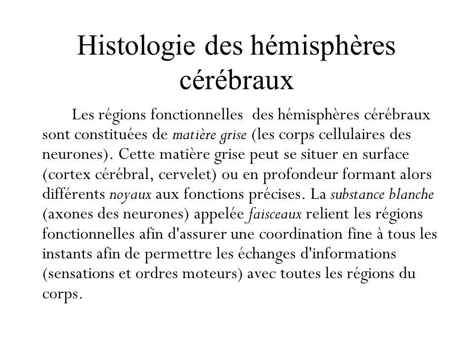 Histologie des hémisphères cérébraux