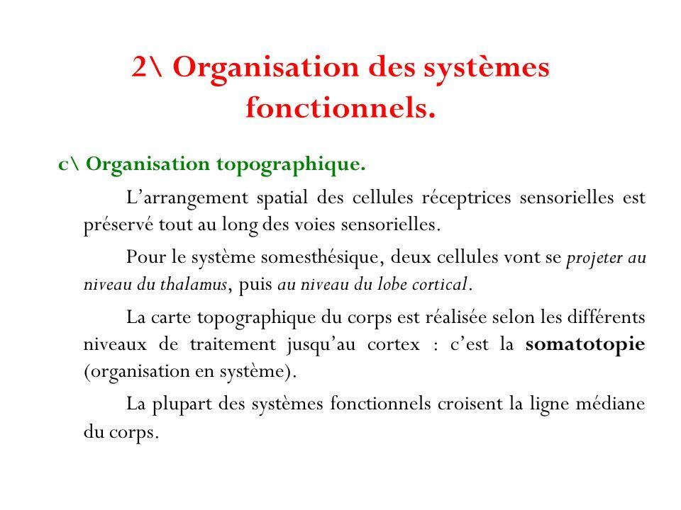 2\ Organisation des systèmes fonctionnels.
