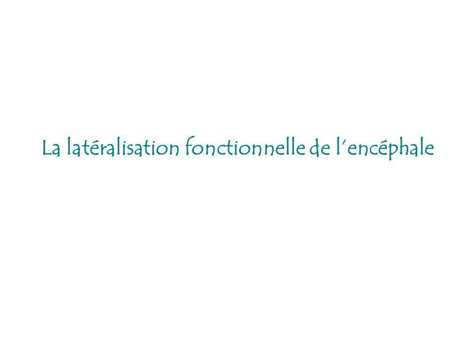 La latéralisation fonctionnelle de l'encéphale