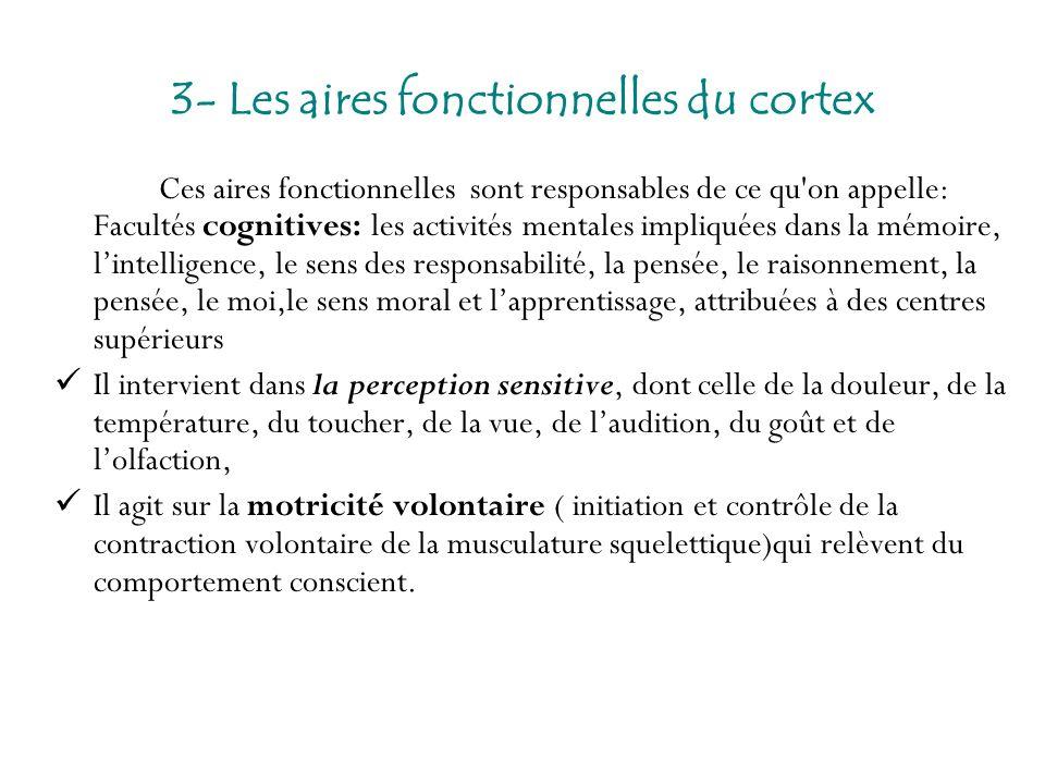 3- Les aires fonctionnelles du cortex