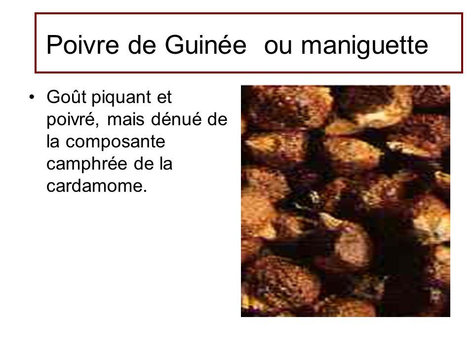 Poivre de Guinée ou maniguette
