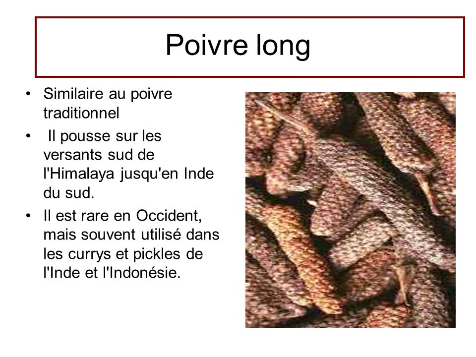 Poivre long Similaire au poivre traditionnel