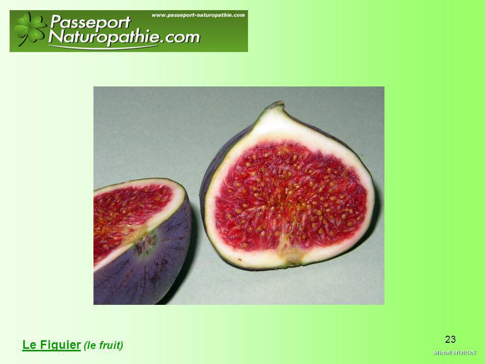 Le Figuier (le fruit) Michel MORON