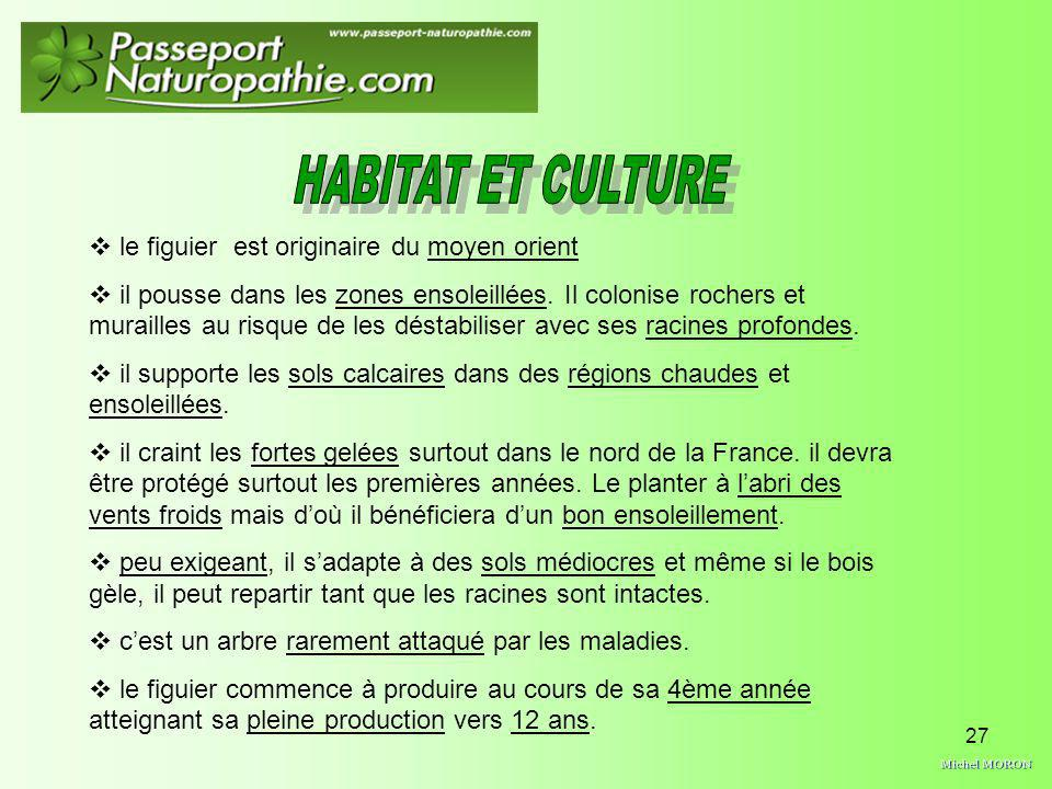 Michel MORON HABITAT ET CULTURE