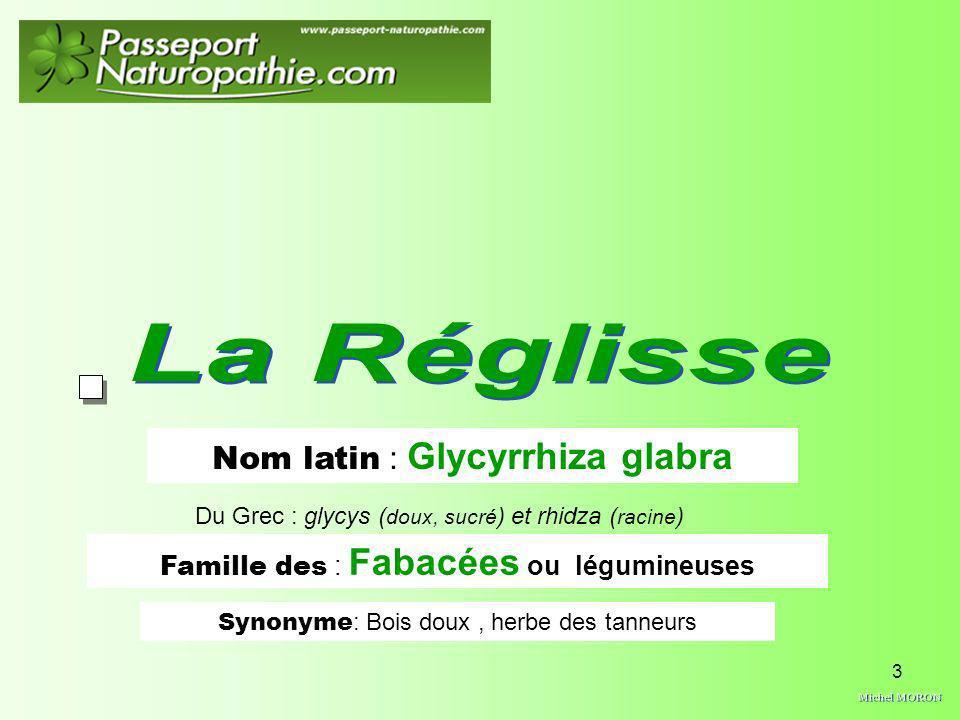La Réglisse Michel MORON Nom latin : Glycyrrhiza glabra
