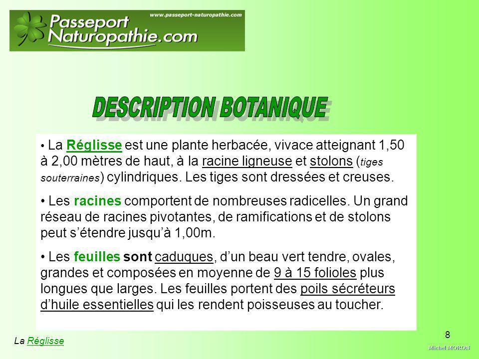 DESCRIPTION BOTANIQUE