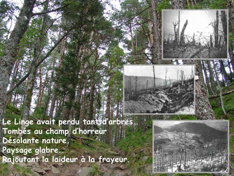 Le Linge avait perdu tant d'arbres…